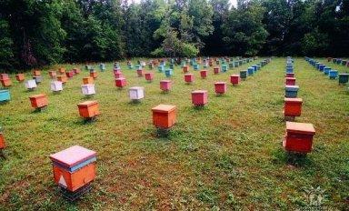 Покупка пчел и место расположение пасеки