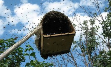 Как сделать роевню для пчел?
