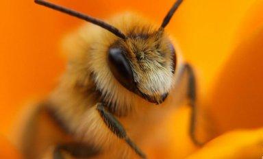 Чем лечить пчел или вовсе не лечить?