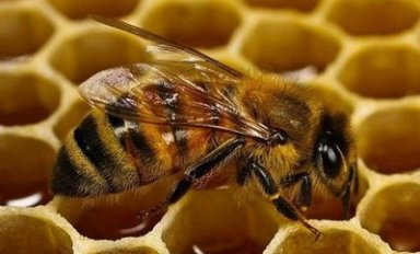 Плюсы и минусы пчеловодства без вощины