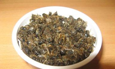 Настойка пчелиного подмора: рецепт приготовления и особенности приема
