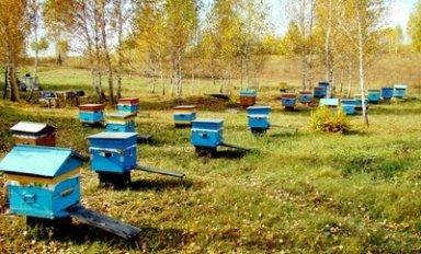 Проверка на Краснополянской станции пчеловодства: такого никто не ожидал
