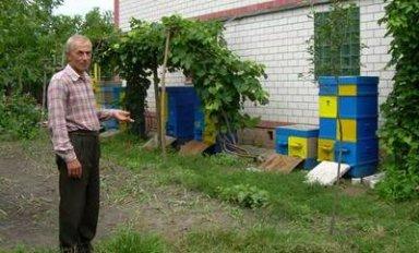 Особенности пчеловодства в улье Озерова