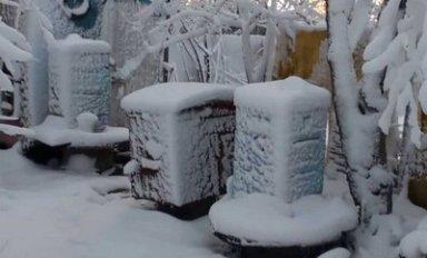 Как утеплить улей на зиму, выбор материала для утепления