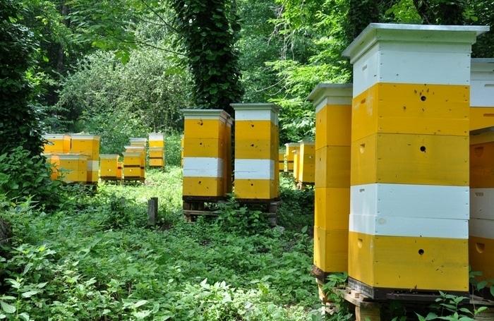 Поведение пчел - один из главных показателей их жизни