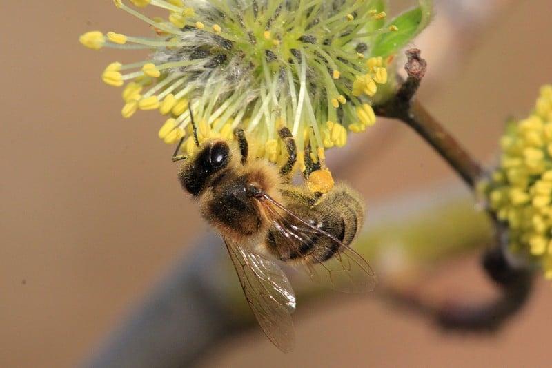 Не стоит постоянно подкармливать пчел