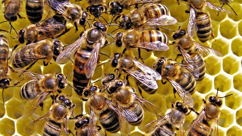 Частные поставщики пчелиных маток, могут быть недобросовестными