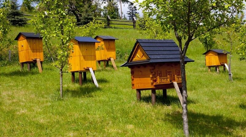 Пчеловодство - не самое просто занятие, к нему необходимо подойти с любовью и терпением
