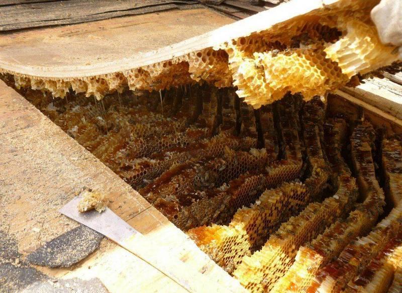 Улей пчел под крышей дома