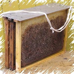 Ловушку для пчел своими руками