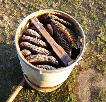 Приманка для пчелиных роев своими руками