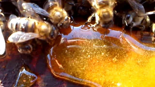 Питание медом