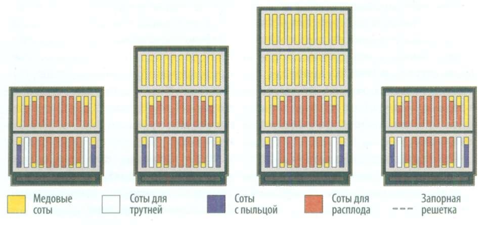 Увеличение численности пчелиной семьи на протяжении года в медовом и ульевом отсеках (слева направо)