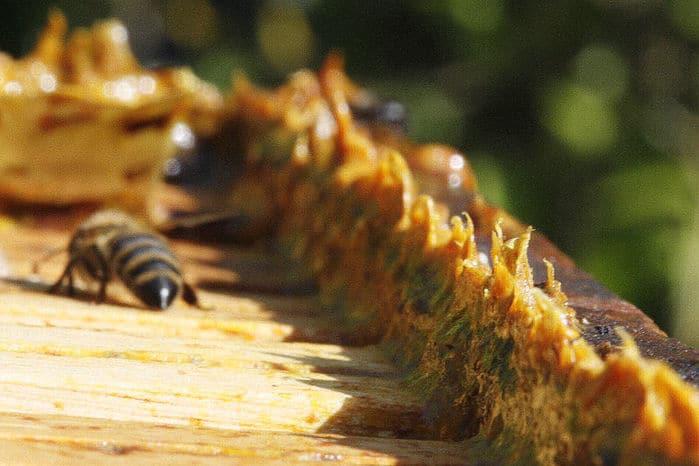 Пчелка трудится