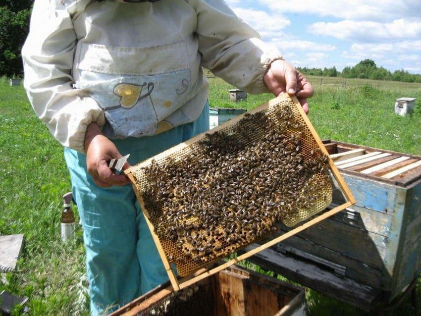 Пчелы построили свои соты
