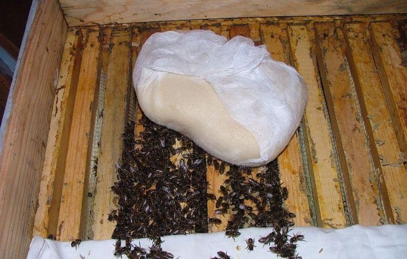 прикормка канди ради пчел
