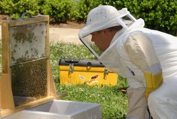 Подкормка рабочих пчел