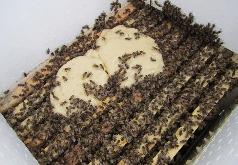 Кормовые соты для пчел