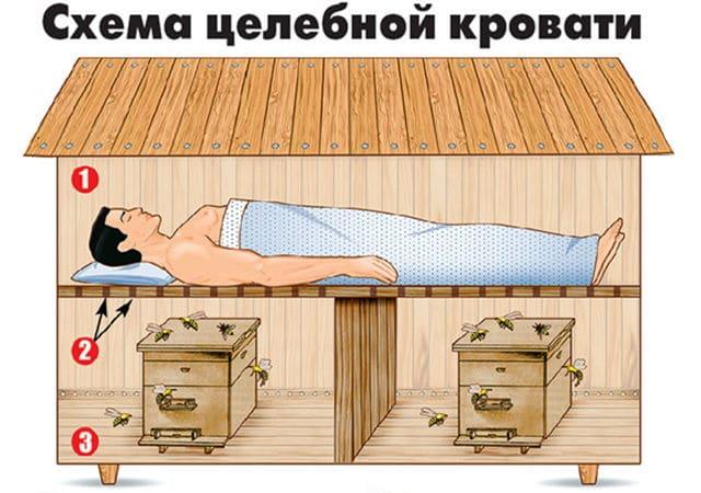 1 - наверху двуспальная кровать с подушкой. 2 - через отверстия в перегородке поступают тепло и лечебные ароматы. 3 - в нижнем отсеке два улья с пчелами.