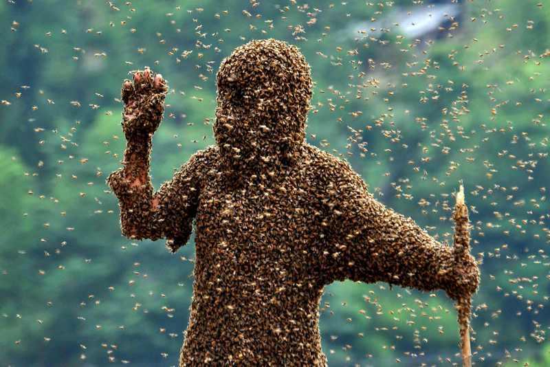 Главное, не переусердствуйте в борьбе с соседскими пчелами