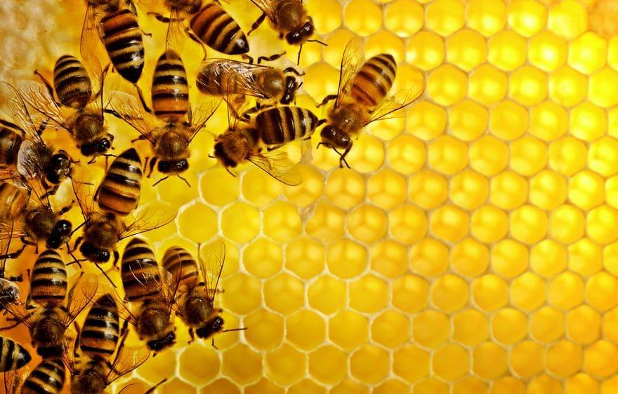 Донниковый мед