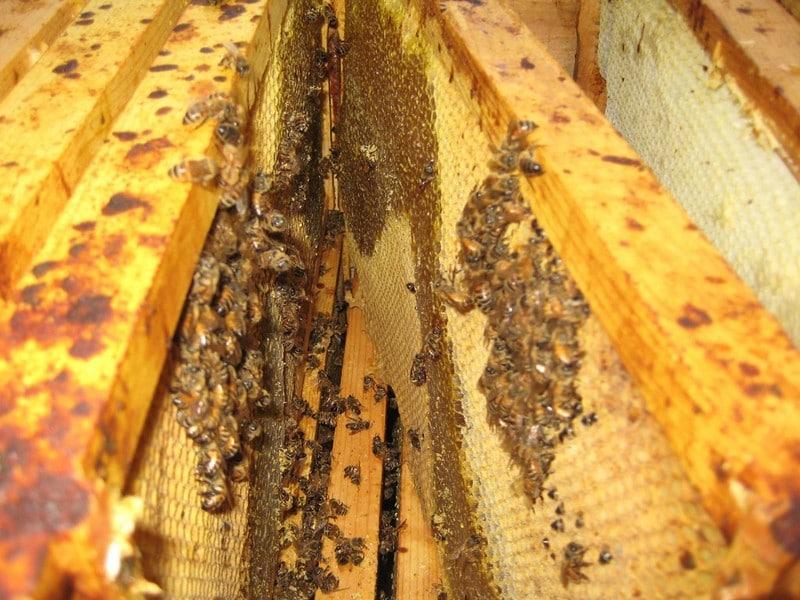 Опоношенные пчелиные рамки