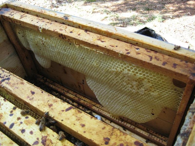 Весь улей, изнутри, в поносе пчел