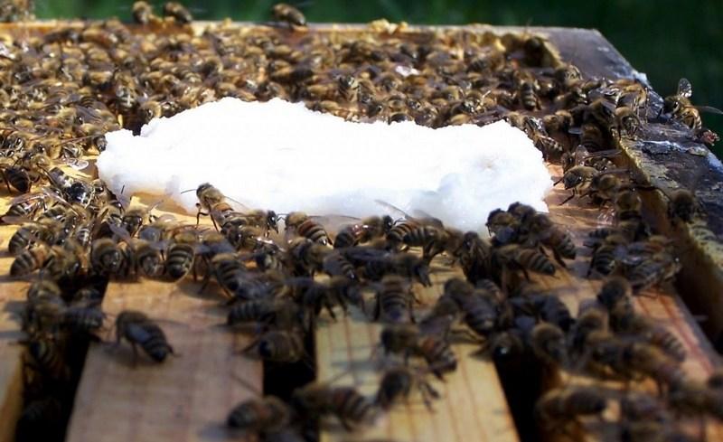 Очень важно дать пчелам все то, что им не хватает для быстрого развития семьи