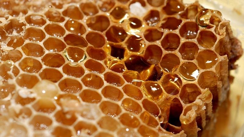Очень вкусные и полезные соты с медом
