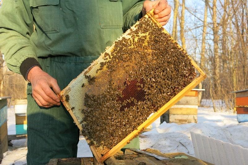 Пчелы Карника зимой