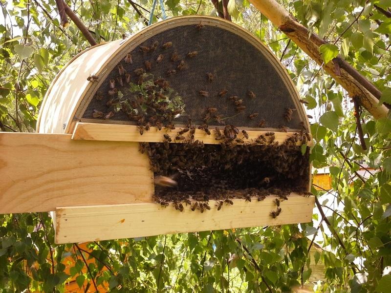 Роевни для пчел необходимо подготовить заранее