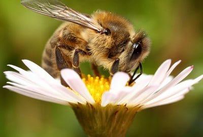 Пчелы какие любят цветы