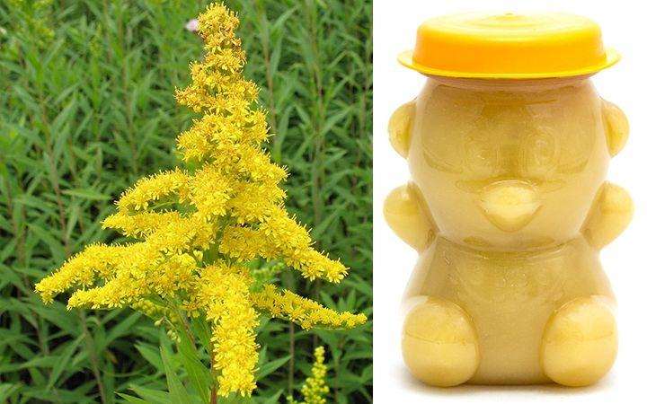 Золотарниковый мед
