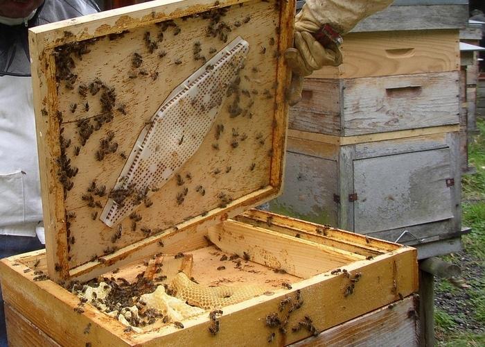 Не стоит заводить собственную пасеку, если вы никогда не имели дела с пчелами