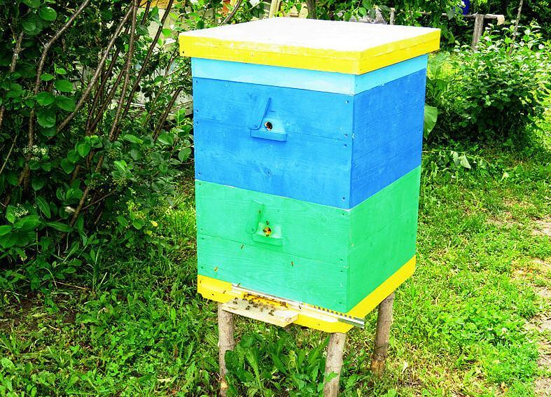 Двухкорпусный улей для двухматочного пчеловодства