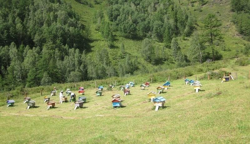 Выбор правильного расположения пасеки - один из главных моментов для начинающего пчеловода