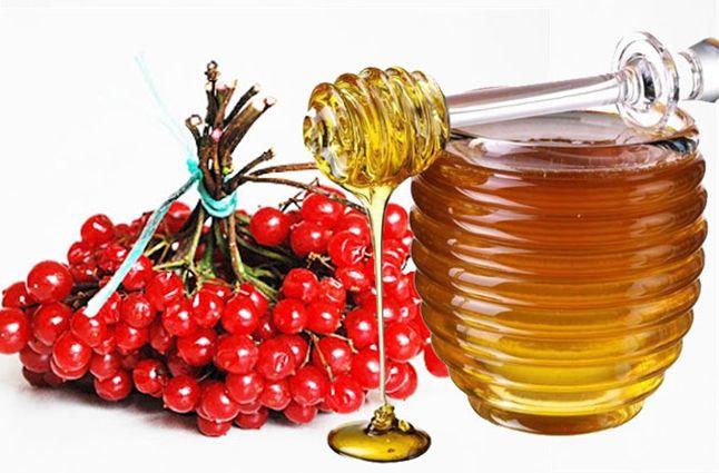 Калина и мед - кладезь вашего здоровья