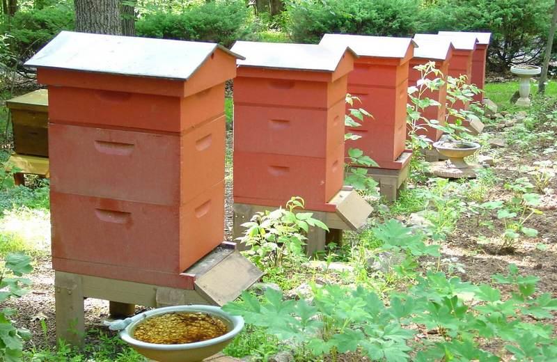 Достаточно часто пасечники выбирают именно традиционный метод пчеловождения