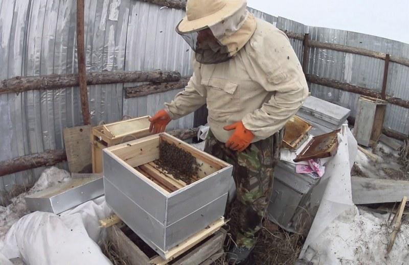 Как сделать отводок пчел весной - видео о пересадке