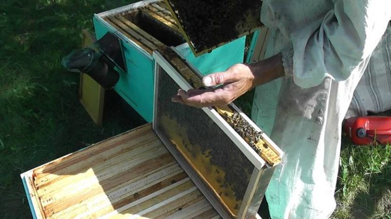 Как сделать матку для пчел 596