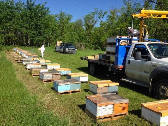 Кочевое пчеловодство очень эффективное и популярное занятие