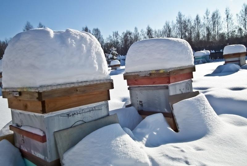 Подготовка пчел к зимовке - крайне важное дело