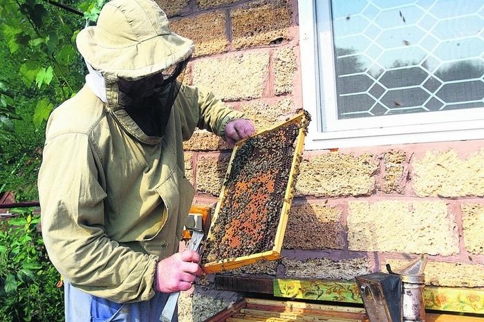 Забота о пчелах непременно принесет хороший результат