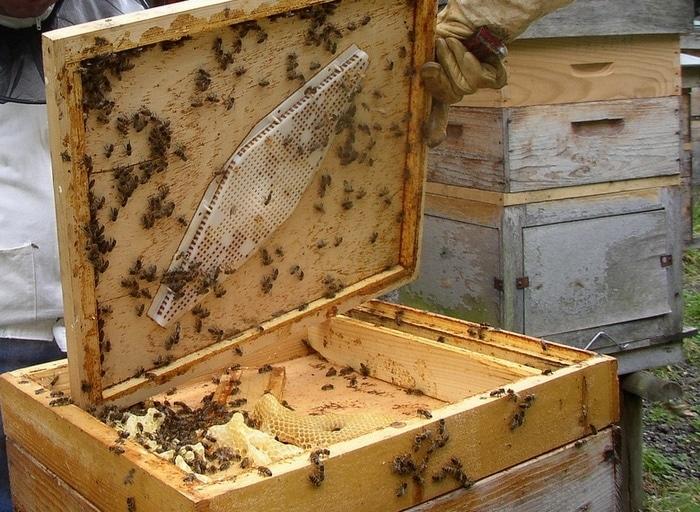 Как и у людей, на жизнь пчел влияют различные факторы