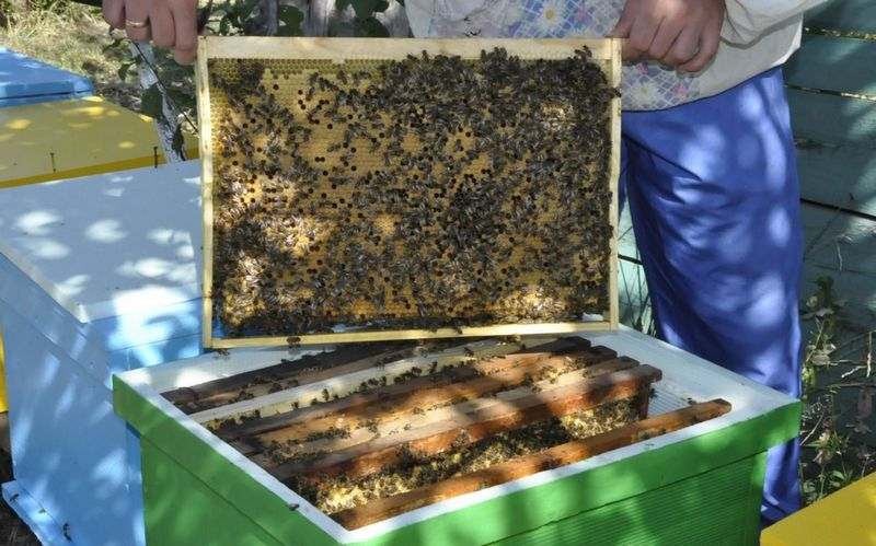 От выбора хорошей пчелиной семьи зависит многое