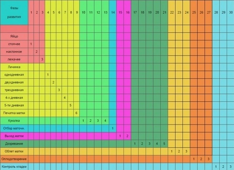 Календарь вывода матки