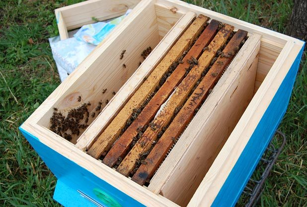 Сформированный пчелиный отводок