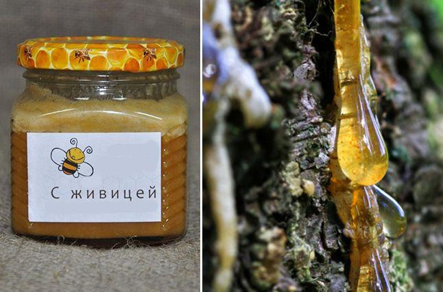 Мед с кедровой живицей полезные свойства