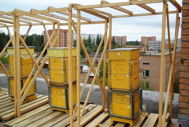 Пчеловодство в многокорпусных ульях на крыше дома