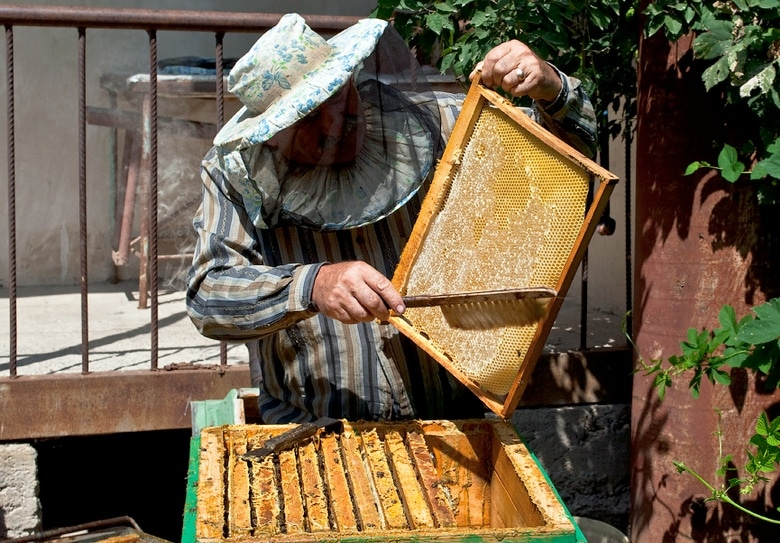 Проверяем рамки на готовность откачки меда